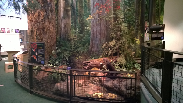 The forest diorama at the Burke Museum in Seattle